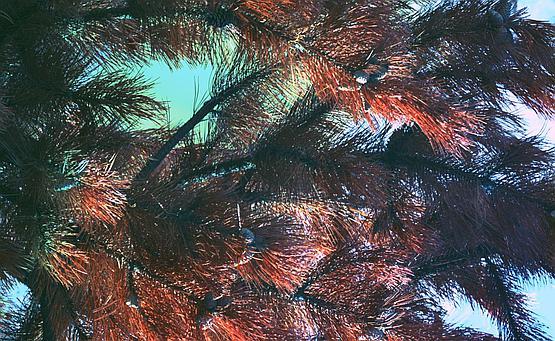 IR-VIS-UV false color image