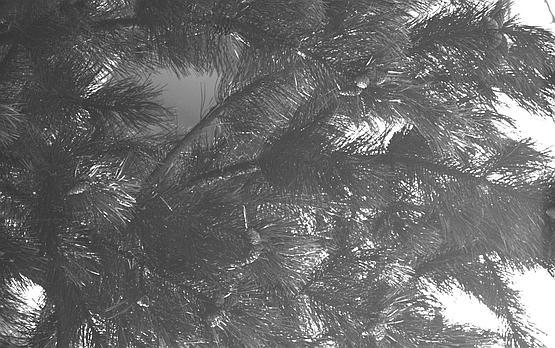 UV band captured through Astrodon UVenus bandpass filter